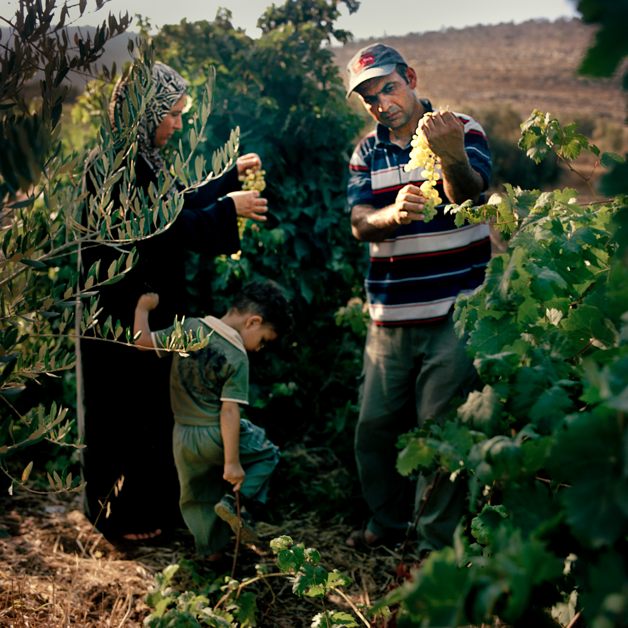 Families from the village pick fruit for the evening dinner during Ramadan.