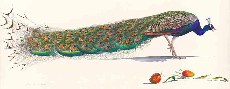 "In an essay that accompanied Prosek's 2008 collection in which Peacock is featured, literary critic Harold Bloom cites ""The Peacock"" by W.B. Yeats: ""What's riches to him/ That has made a great peacock/ With the pride of his eye?"""