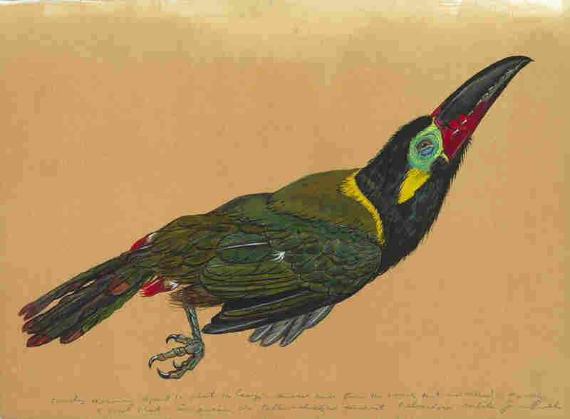 Toucanet is from the same 2010 collecting trip to Suriname. Prosek has traveled through the Balkans, southeast Turkey, New Zealand and Micronesia to document rare, threatened and fantastical species.