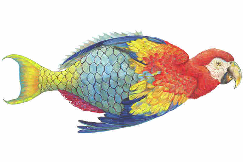 "Parrotfishe is one of James Prosek's ""hybrid paintings."" Created in 2005, the image is a ""commentary on how we name nature. This creature, a parrotfish, became its name in protest of being named."""