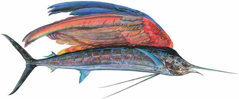 "Sailfishe, a monumental 10-foot painting of a hybrid creature, shows a glistening life-size Pacific sailfish that Prosek caught in Mexico — only instead of a dorsel fin, the fish has a colorful parrot wing. ""With all that we know now, imagination is becoming extinct,"" says Prosek. ""I am trying to forget. I am pretending to be a naturalist from a time past."""