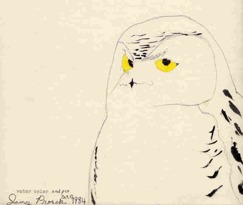 "As a boy, James Prosek was inspired by Audubon's Birds of America, just like the protagonist Doug in Gary D. Schmidt's Okay for Now. ""I was 9 when I painted this snowy owl,"" Prosek says. ""I had started using my grandfather's typewriter ... writing poems and stories over the birds."""