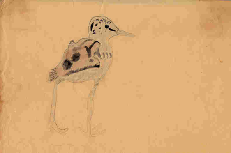 Prosek was inspired by the ornithologist and artist Louis Agassiz Fuertes when he made this watercolor of a black stilt chick at age 8.