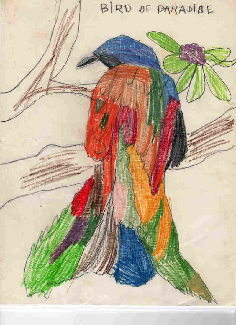 For this fanciful colored pencil drawing of a bird of paradise, Prosek traced over letters that his mother had written for him.