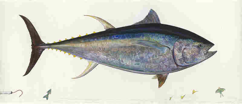 Prosek painted Bluefin Tuna in 2004 from a specimen he harpooned in Cape Cod near Barnstable, Mass. The massive life-size image depicts a 750-pound fish more than 9 feet long.