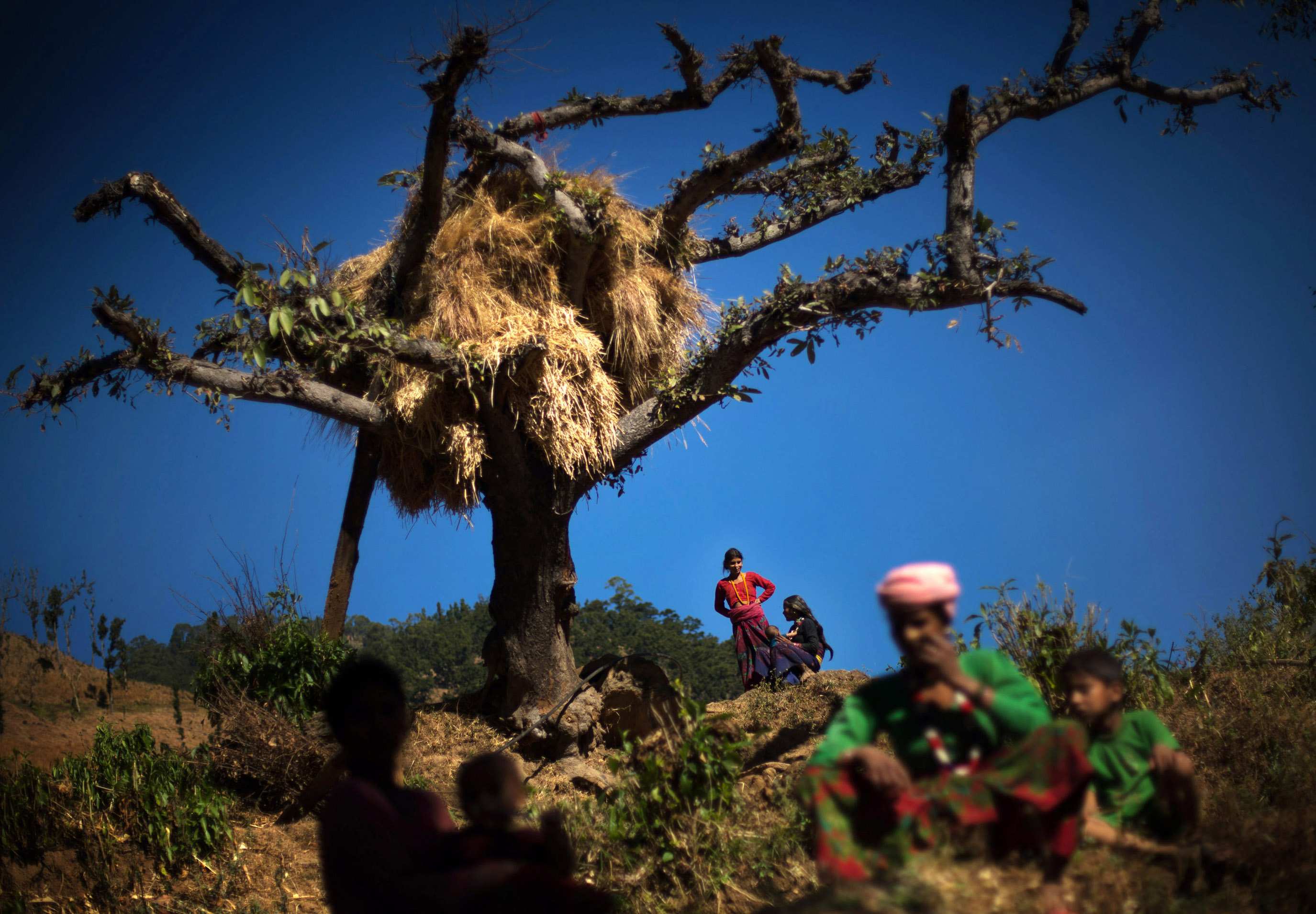 Family members of Jeera sit under a dead tree on the site where two of her baby girls were killed in separate overnight attacks. One was killed by a jackal, and the other by a snake as Jeera observed chaupadi six and eight years ago, respectively.