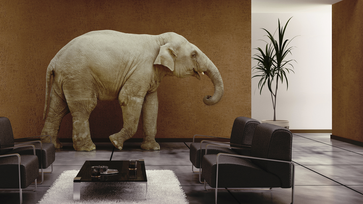 The elephant in living room idiom meaning best elephant 2017 for Living room meaning