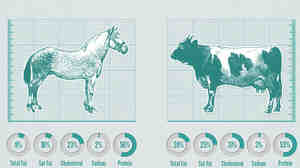 The great horse meat scandal infographic.