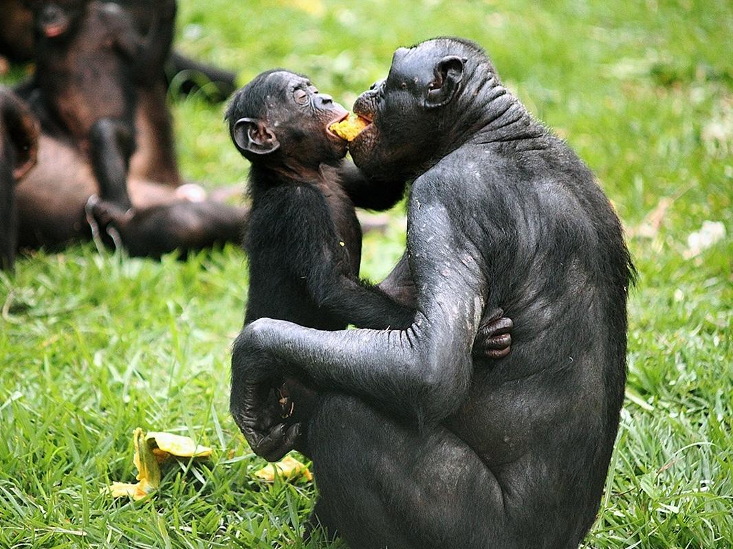 A Natural History Of Rape Primates