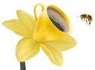 A promo image depicting a bee at a coffee flower.