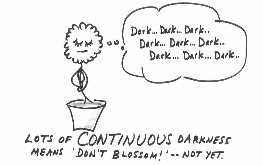 Continuous darkness