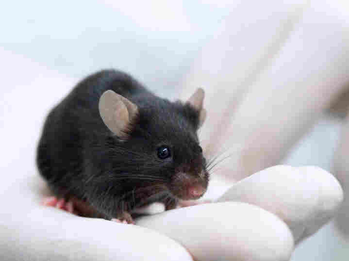 A simple switch of ingredients made a big difference in how mice responded to experimental cancer vaccines.