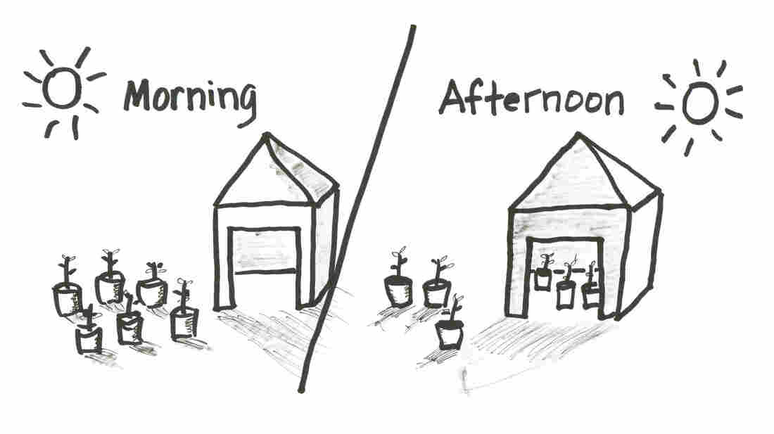 Morning-Afternoon Experiment
