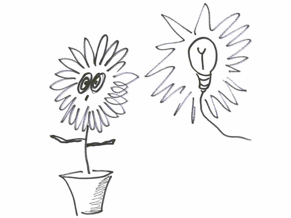 Plant and bulb