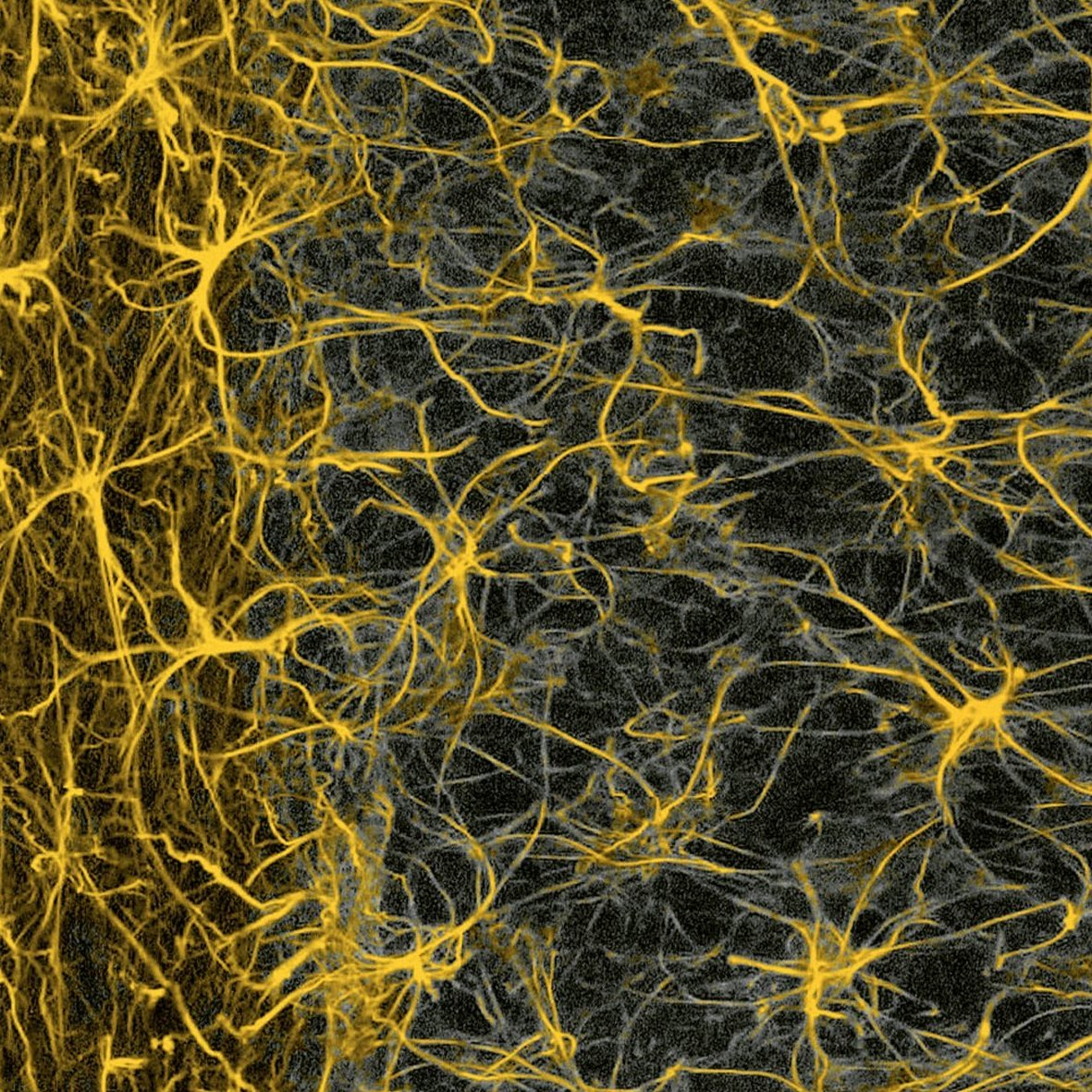 Another panel of glial cells