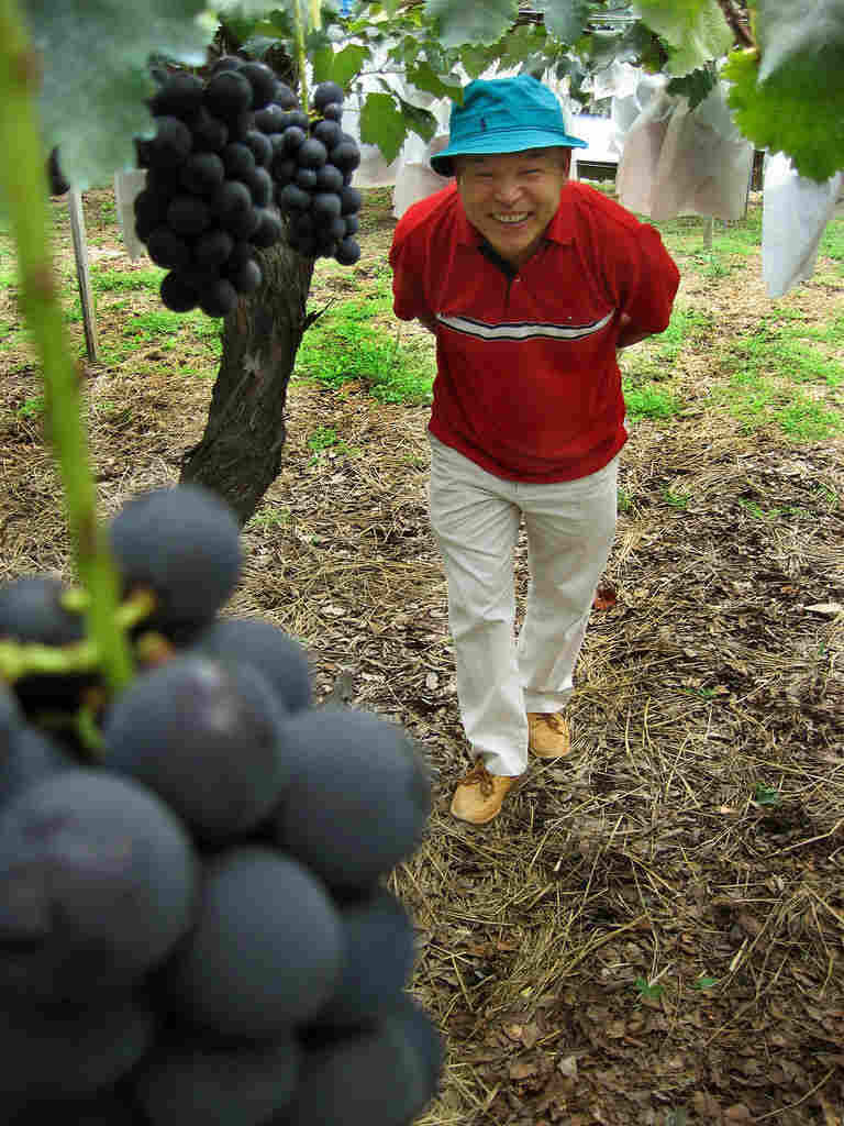 The Japanese also love big and juicy grapes. One variety there, called Kyoho, grows so large that people even peel them.