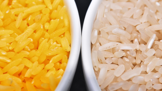 Genetically modified to be enriched with beta-carotene, golden rice grains (left) are a deep yellow. At right, white rice grains. (International Rice Research Institute)