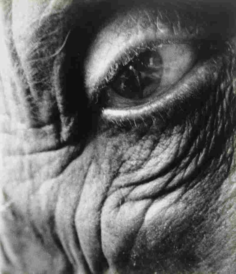 Bill Brandt Eye