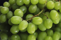 Left to their own devices, many seedless grapes would be puny and soft. But these Thompson seedless got pleasingly plump after a little girdling and hormone treatment.