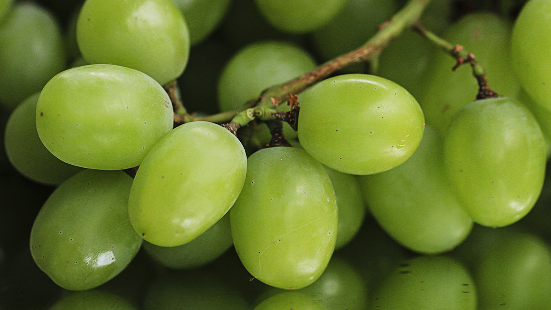 We Like Em Big And Juicy How Our Table Grapes Got So Fat The