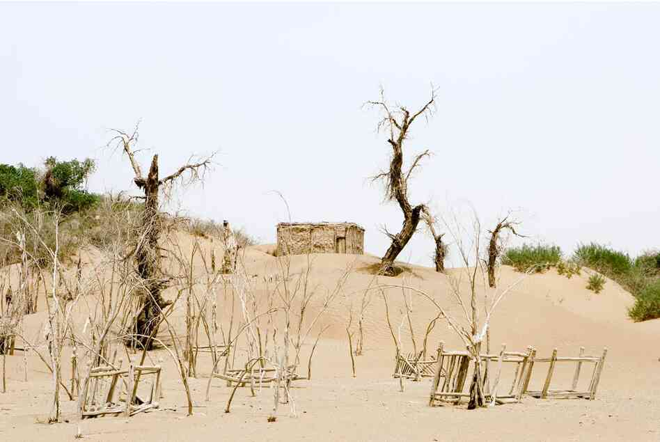 Unrevealed, Site 1 (Trees and Shelter), 2007. Many graves and ancient desert trees line the path that leads to a great saint's marker. Shelters have been built so pilgrims may spend the night, as a journey to a mazar is far for many. The shelter also offers respite from the high heat of the day and can be used as a place to have small meals.