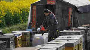 Nation's Biggest Honey Packer Admits 'Laundering' Chinese Honey