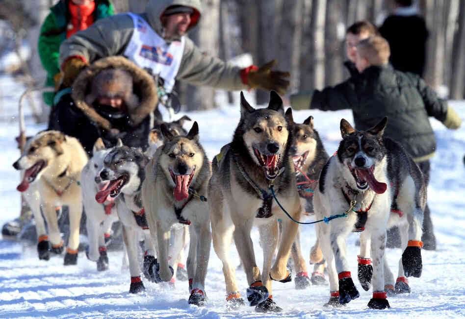 Several female mushers in the
