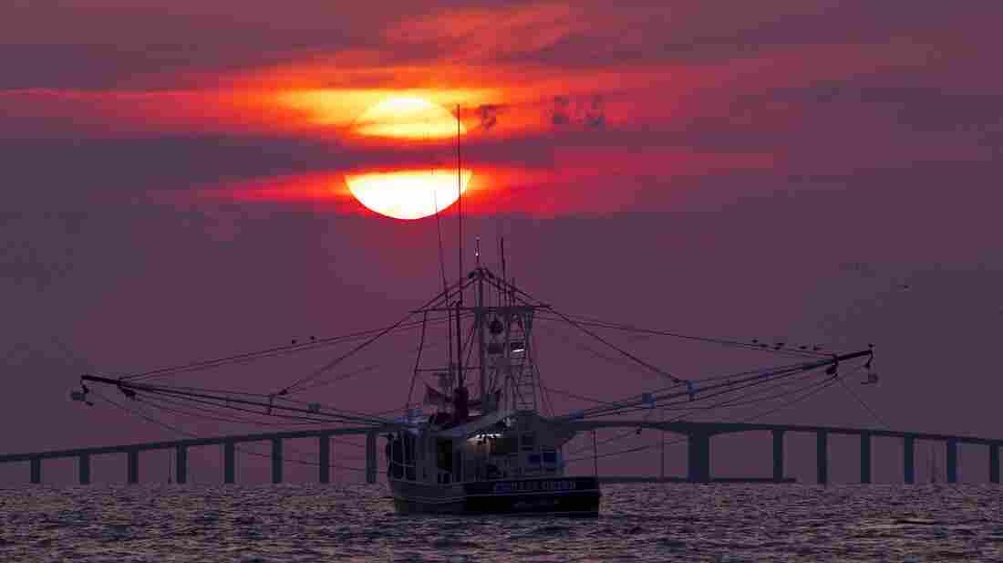 The shrimp boat Endless Grind trawls f