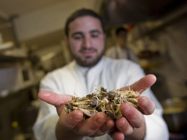 An Israeli cook displays locusts at a restaurant in Jerusalem, at a 2010 event promoting locusts as a tasty kosher treat.
