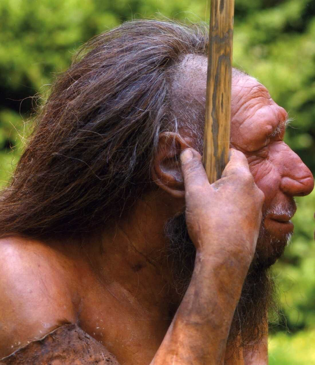 Neanderthal profile