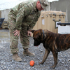 Military Police Sgt. Joshua Hancock and Nero, his Dutch shepherd, play at Forward Operating Base Frontenac in Kandahar province in southern Afghanistan. Nero is trained to sniff out improvised explosive devices, or IEDs, and to attack.
