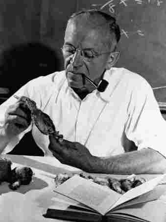 Aldo Leopold examines a dead bird.