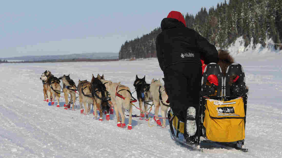 On their way to victory: Mitch Seavey and his team as they left White Mountain, Alaska, on Tuesday in the last leg of the Iditarod.