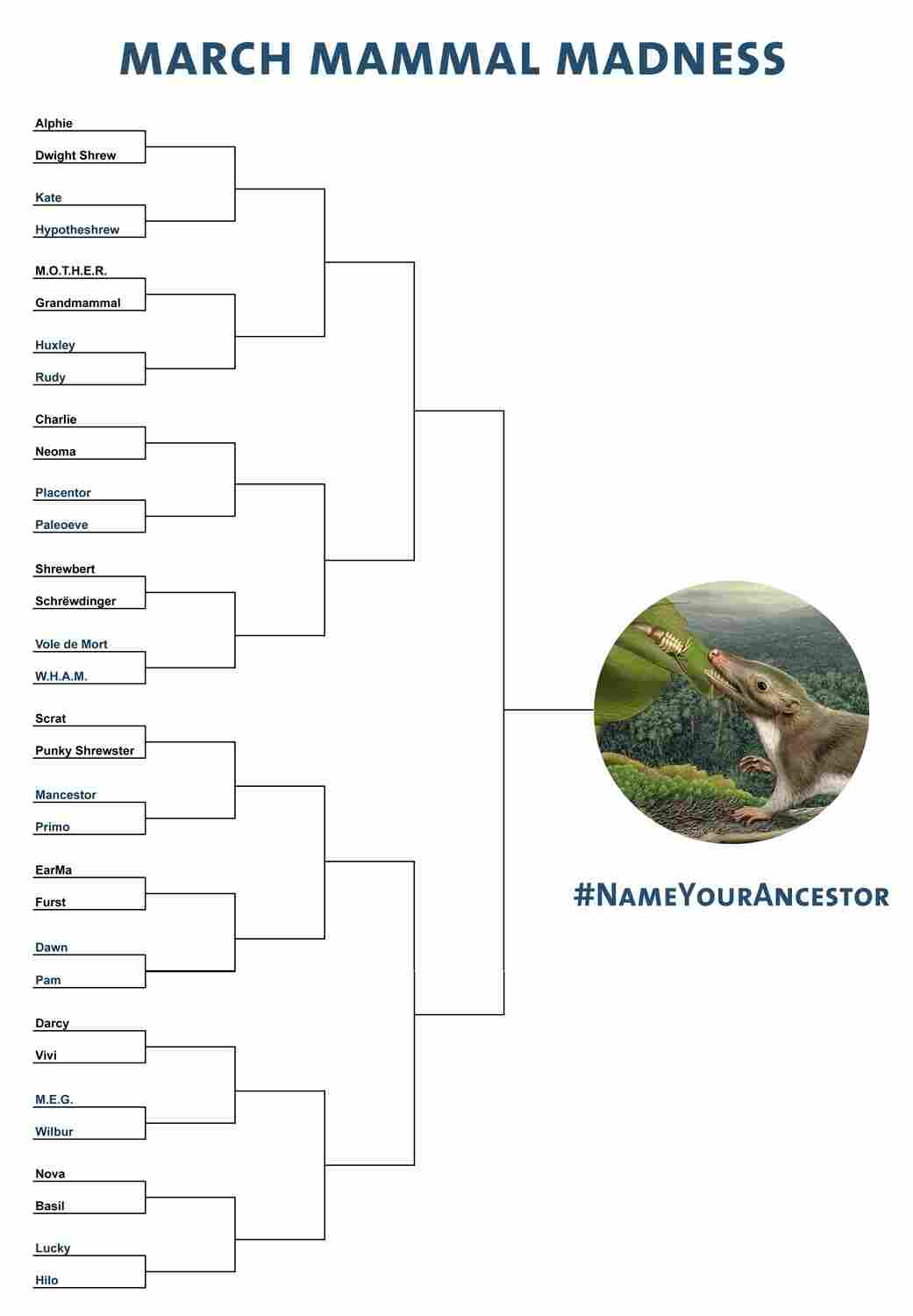 Mammal March Madness