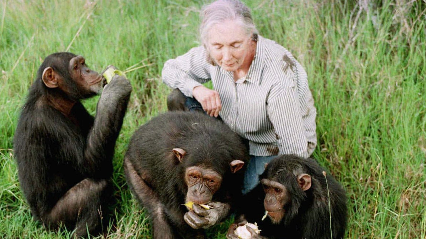 Book News Jane Goodall Chimpanzee Jane