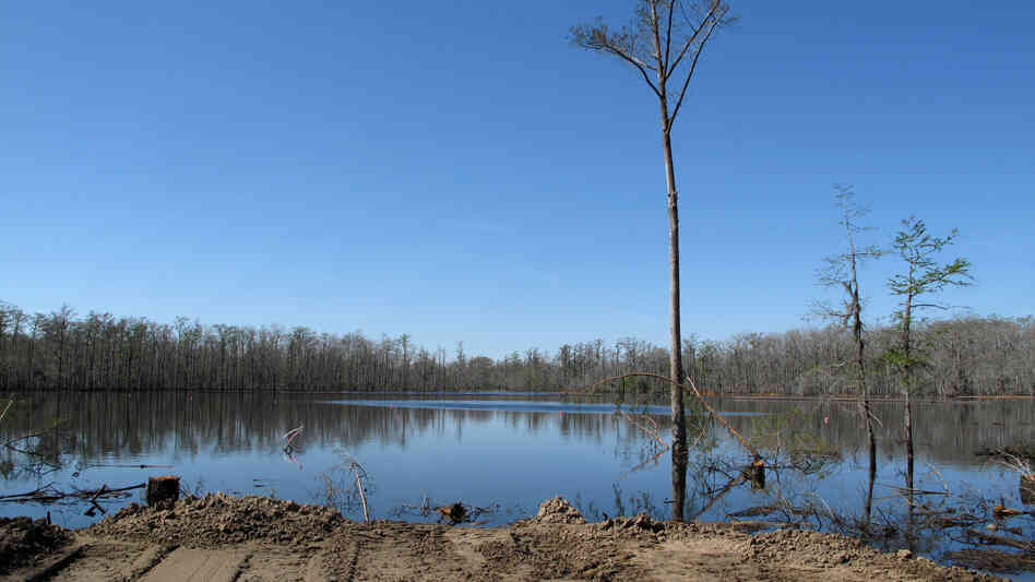 After the collapse of a salt mine in south Louisiana last year, a 9-acre sinkhole has flooded the area. It also caused ga