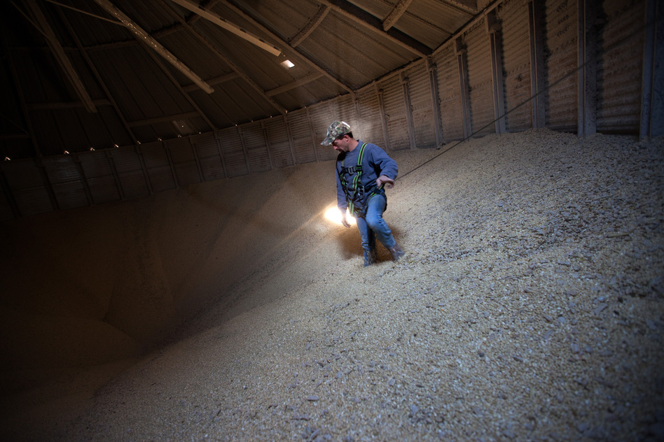 "Grain operations manager Austin Clubb, wearing a body harness for safety, gazes into the ""cone"" inside a massive grain bin at Amana Farms in Homestead, Iowa. Cones, which can trap workers, form in the flowing grain as it's drained from bins. (NPR)"