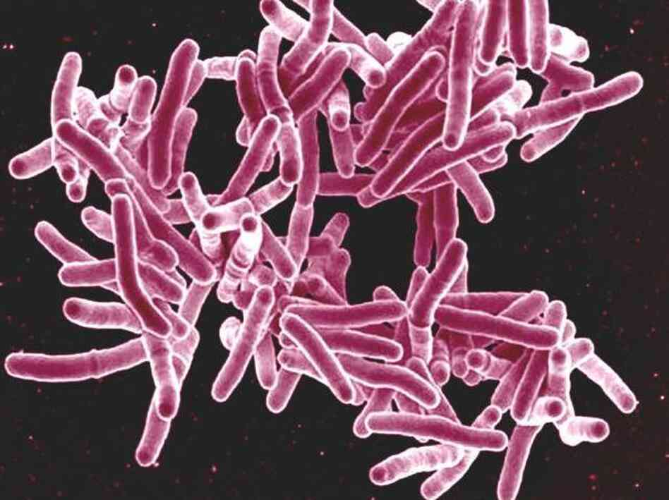 About a third of the world's population is thought to be infected with Mycobacterium tuberculosis, but only a small fraction of people get the disease.