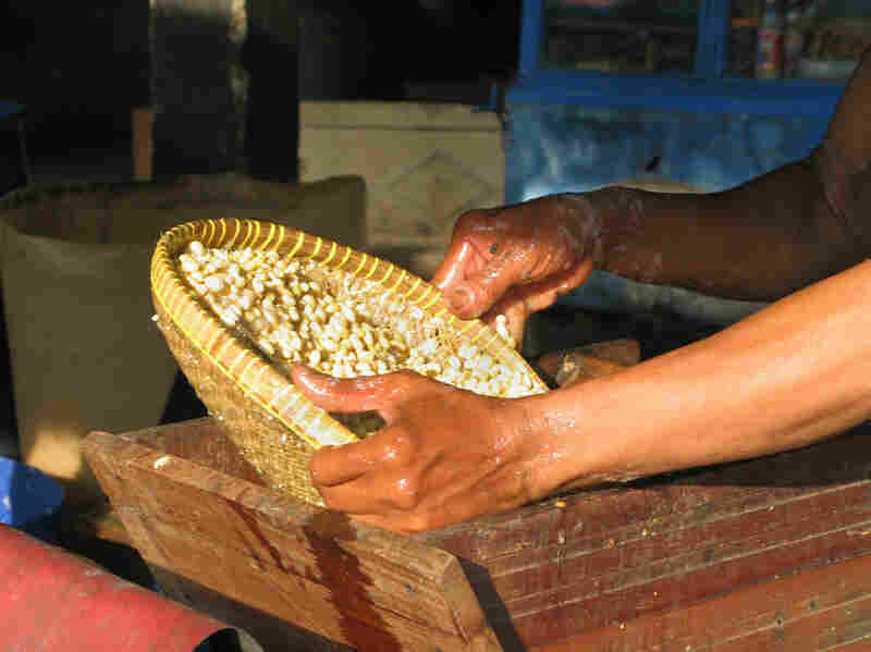 Tempeh is a mildly fermented soybean cake common in the Indonesian diet. Production starts with the washing and husking of beans.