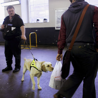 A drug-sniffing dog checks for illegal substances at a London train station in 2007. British police are now issuing