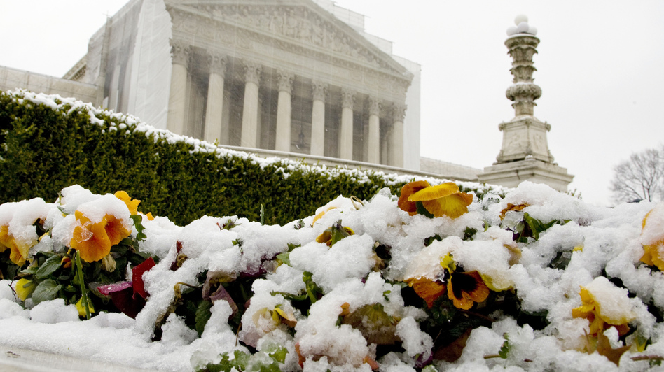 Snow covers flowers in front of the Supreme Court building on Monday in Washington, D.C. On Tuesday, the justices hear oral arguments on the constitutionality of California's Proposition 8, which banned gay marriage. (Reuters /Landov)