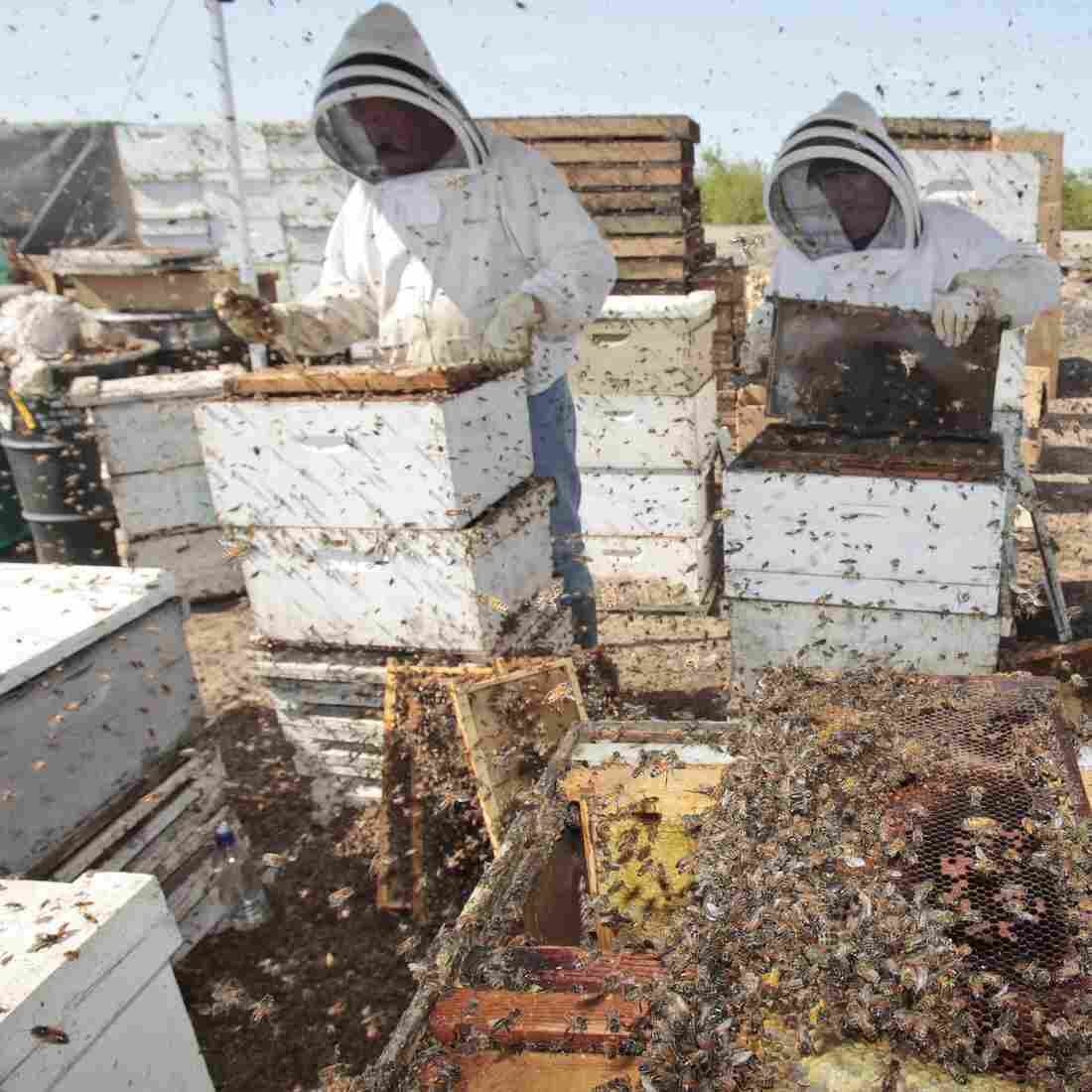 Are Agriculture's Most Popular Insecticides Killing Our Bees?