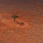 "Thousands of ""fairy circles"" dot the landscape of the NamibRand Nature Reserve in Namibia. Why these barren circles appear in grassland areas has puzzled scientists for years."