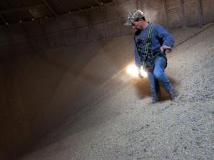 Grain Operator Austin Clubb surveys corn inside the Homestead Grain Facility at Amana Farms near Cedar Rapids, Iowa.
