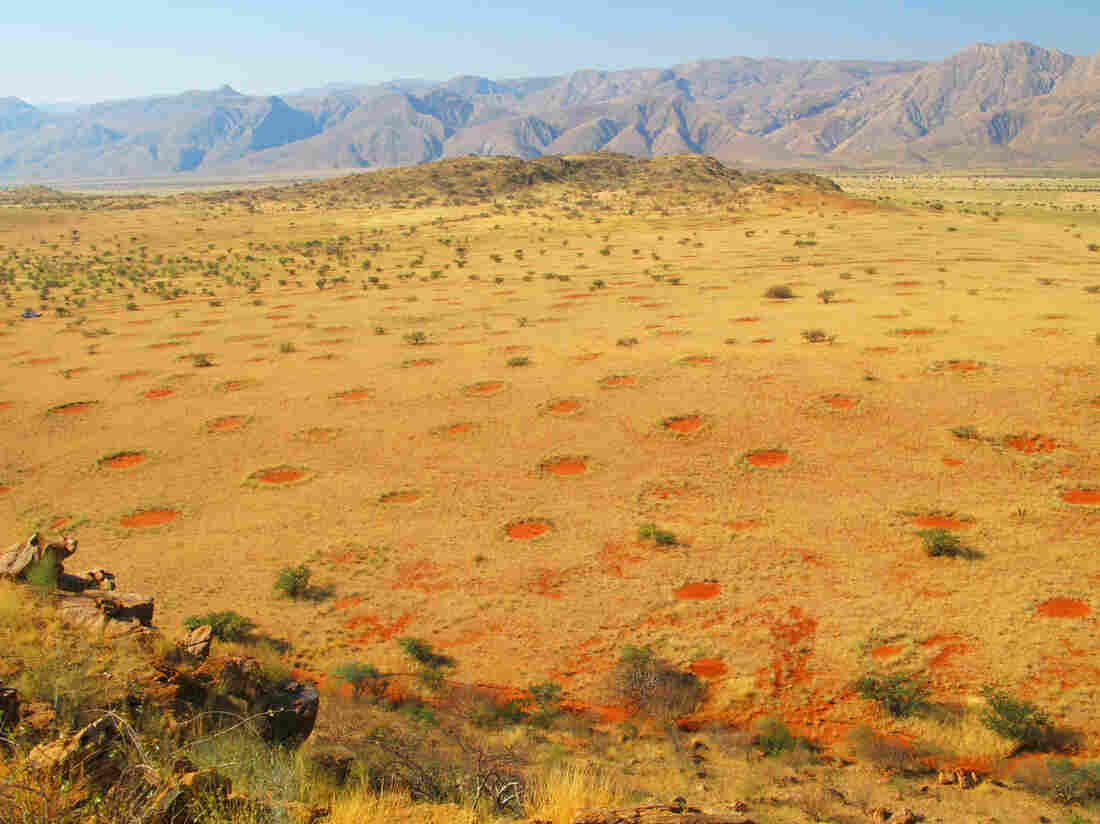 Fairy circles in the Marienfluss Valley of Kaokoveld, Namibia. In the past, people have suspected poisonous plants, seeping gas or even radiation might be behind such shapes.
