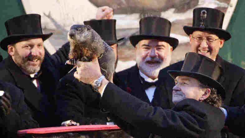 Punxsutawney Phil and his buddies on Groundhog Day, 2012.