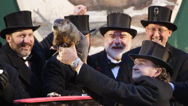 Punxsutawney Phil and his buddies on Groundhog Day, 2012. (AP)