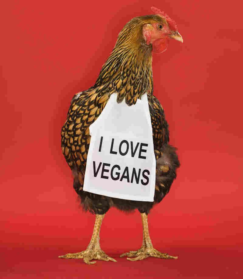 "Golden Laced Wyandotte chicken wearing sign reading ""I love vegans""."