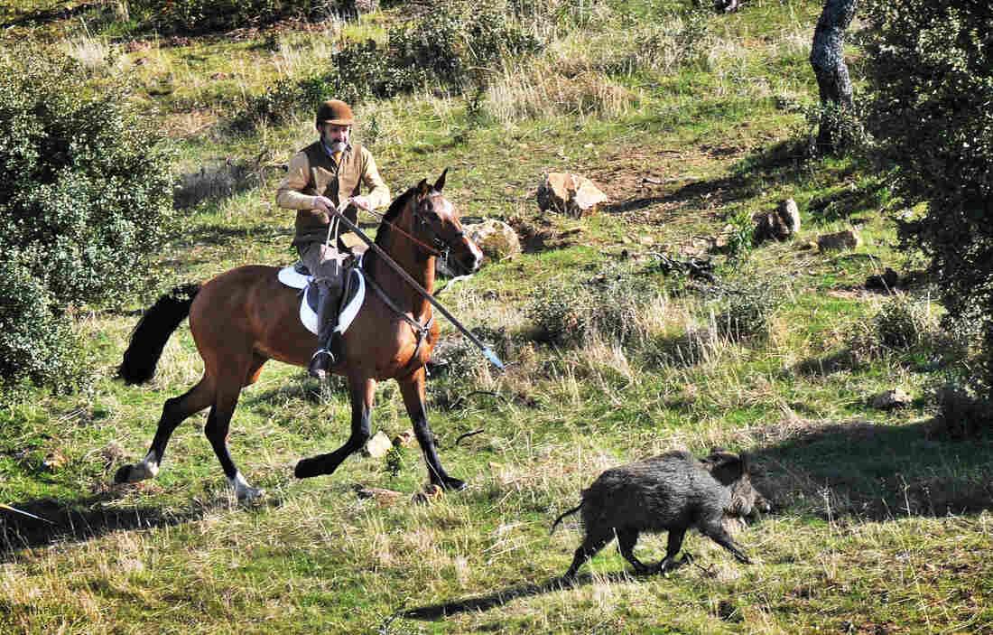Ramiro Maura hunts wild boar at his ranch near Madrid in February.
