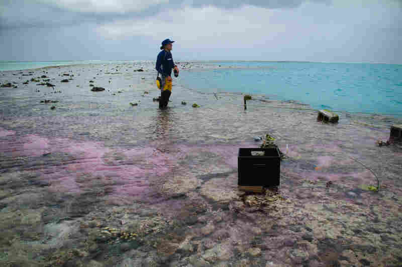 The antacid mixture is pumped over the reef during the hourlong experiment. Caldeira hopes it will neutralize the water and help the coral grow.